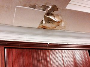 An attorney for the seniors at the Prospect Park Residence shared this photo of a leaking ceiling at the facility, which is also infested with bed bugs. Photo courtesy of Judith Goldiner, Legal Aid Society
