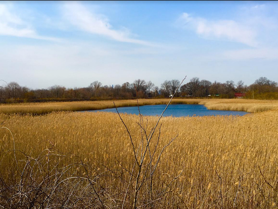 Ah, Wilderness! Actually, this is Ridgewood Reservoir in Highland Park. Eagle photos by Lore Croghan