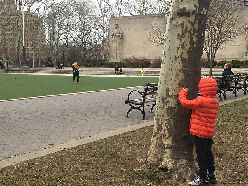 """A young boy peeks out from behind a tree during a game of hide-and-seek on Tuesday in Cadman Plaza Park in Downtown Brooklyn. In the Borough President's assessment of Brooklyn's parks, Cadman received a ranking of """"five leaves."""" Eagle photo by Mary Frost"""