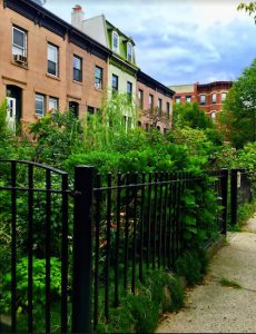 The greenery's dazzling in the Carroll Gardens Historic District. Eagle photos by Lore Croghan