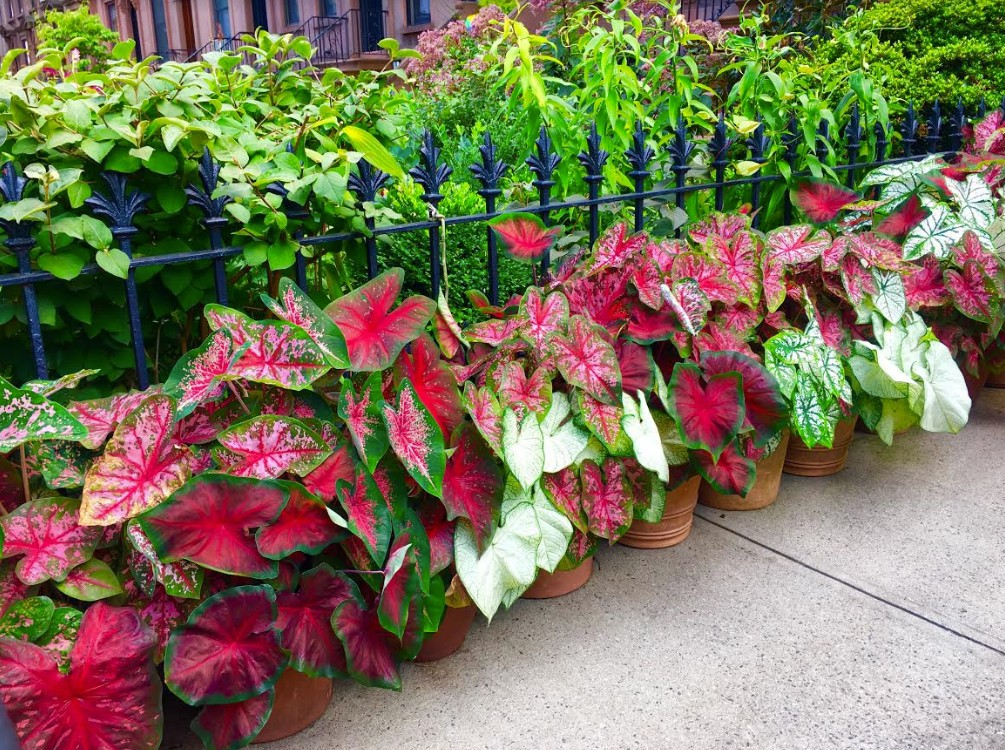 Potted plants form a pretty border on a President Street patio.