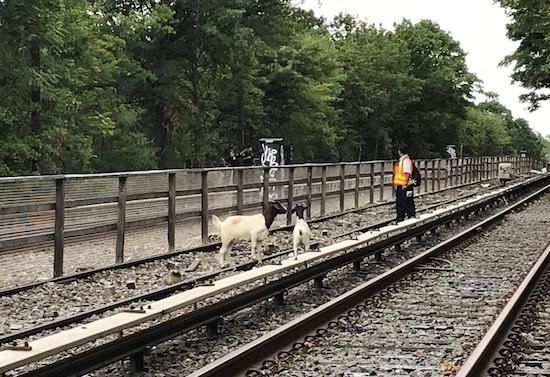 Photo courtesy of New York City transit