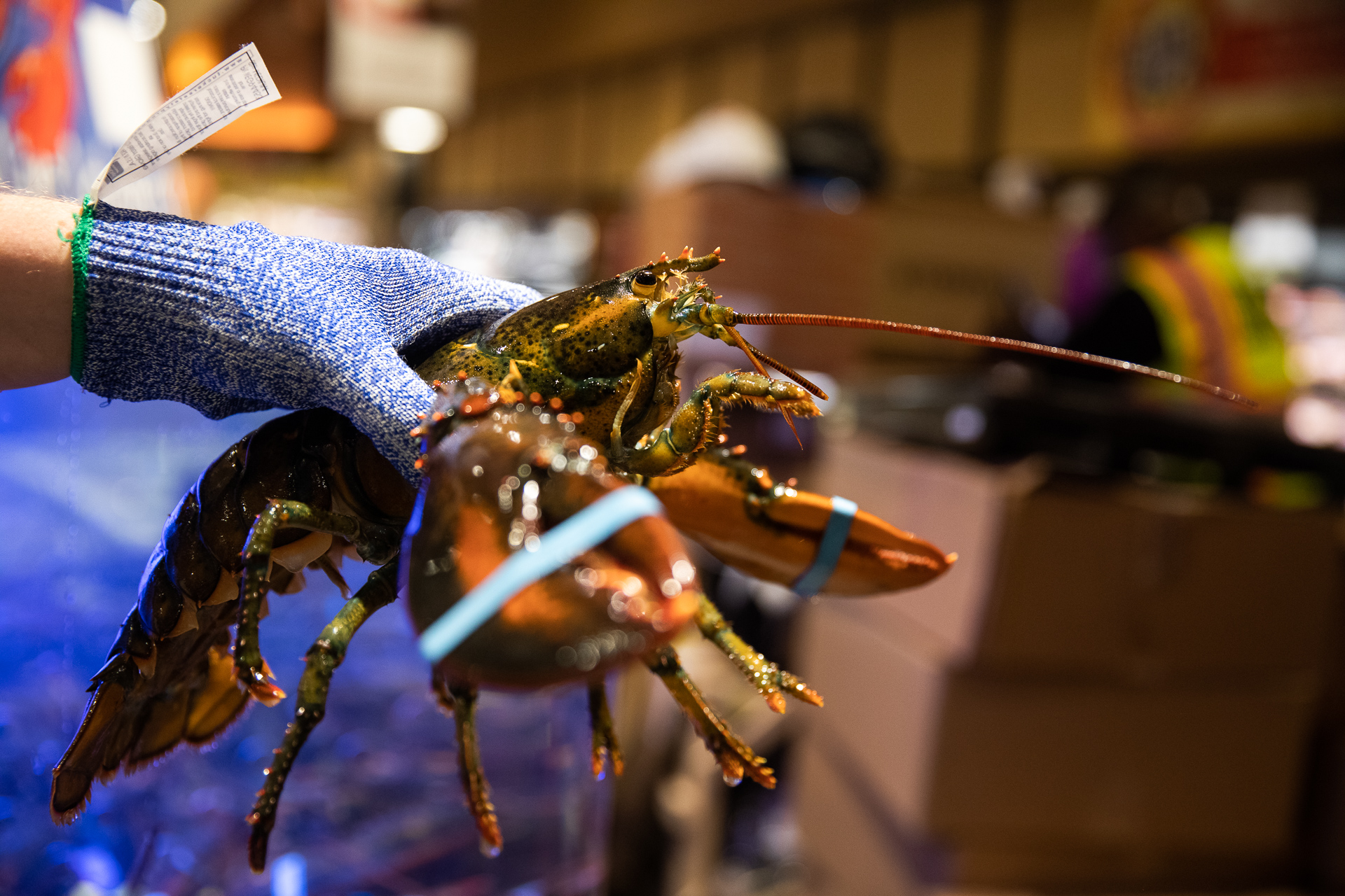 Wegmans' seafood department will steam lobster or other shellfish for you if you wish. Eagle photo by Paul Frangipane