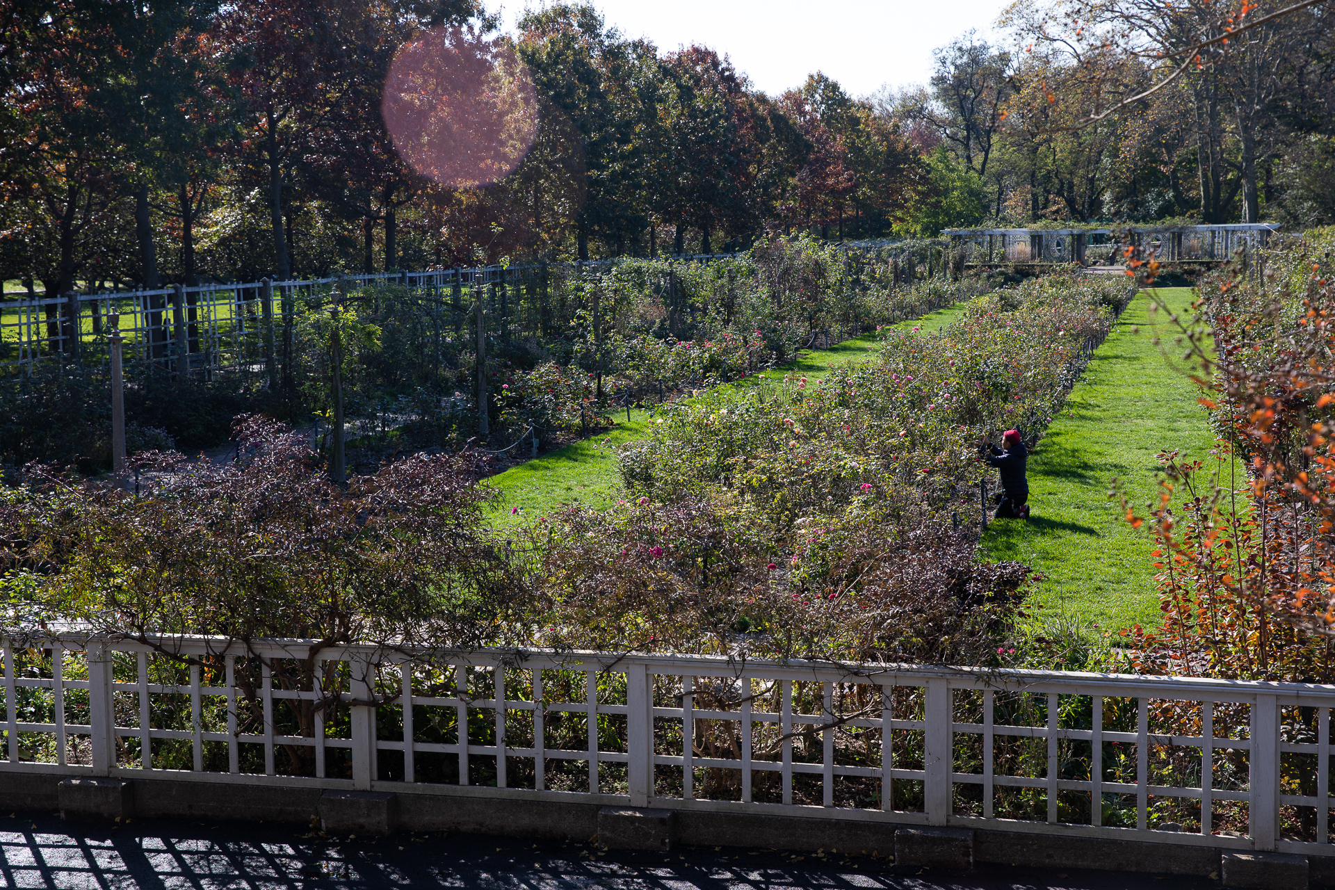 A switchback on the Robert W. Wilson Overlook's pathway has an excellent view of the Cranford Rose Garden. Eagle photo by Paul Frangipane