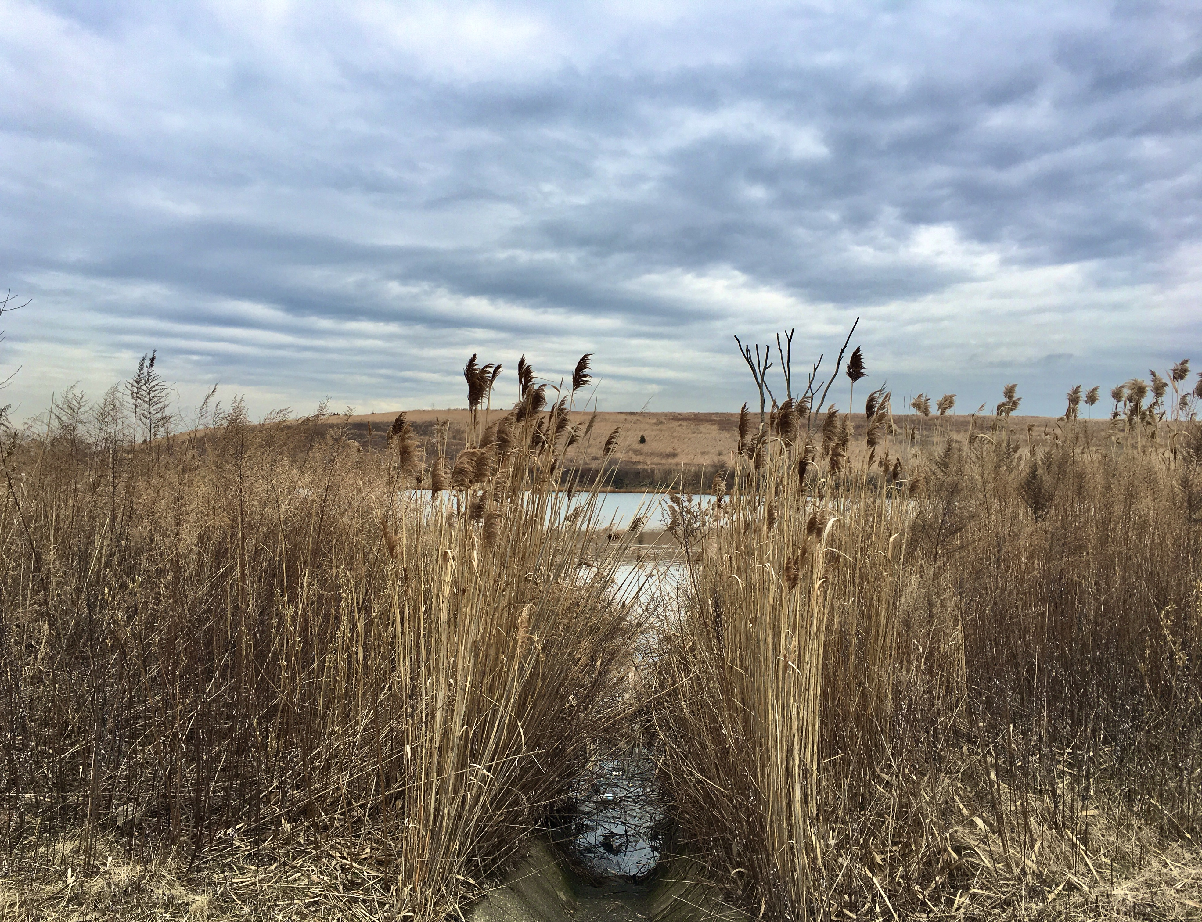 Tall grasses grow beside Hendrix Creek Road in Shirley Chisholm State Park. Photo: Lore Croghan/Brooklyn Eagle