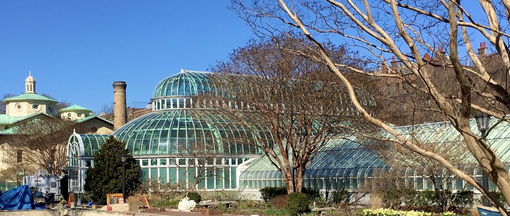 When I visited Brooklyn Botanic Garden, the greenhouses had already been closed to keep people from standing close to one another. Photo: Lore Croghan/Brooklyn Eagle